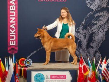 Hansol Eurodogshow Brussels 2016 klein